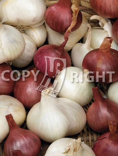 aglio bianco e violetto in miscuglio