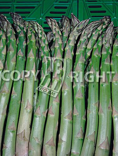 asparago mary washington