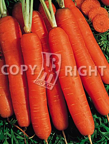 carota nantese migliorata