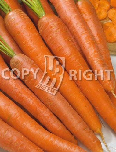 carota touchon