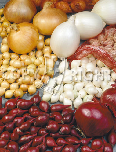 bulbilli di cipolla in miscuglio