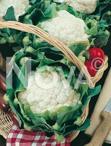 cavolfiore erfurter
