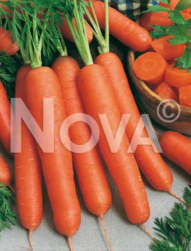 carota nantese