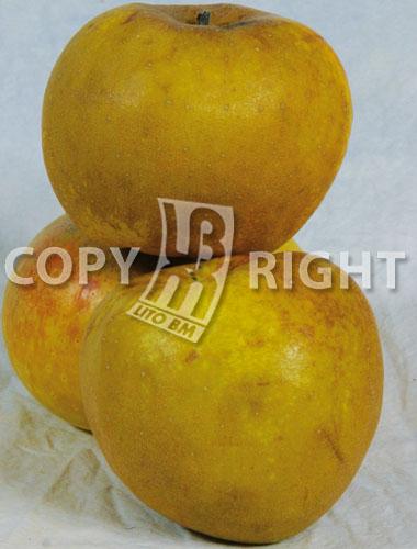 renetta ananas