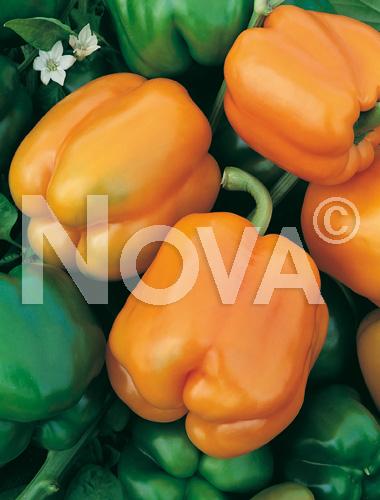 peperone quadrato d'asti orange