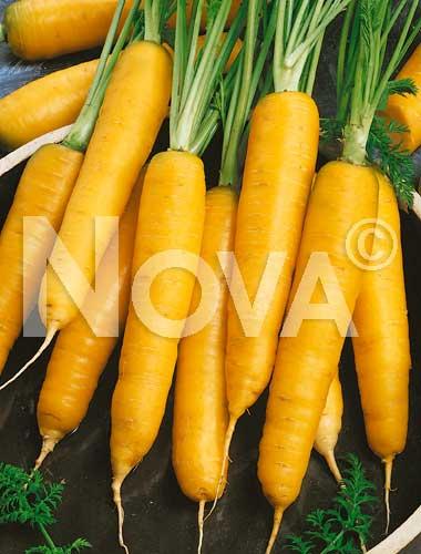 carota gialla di lubiana