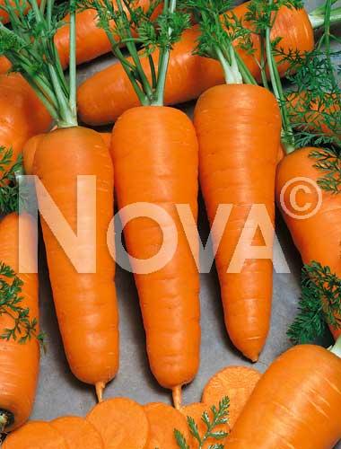 carota chantenay
