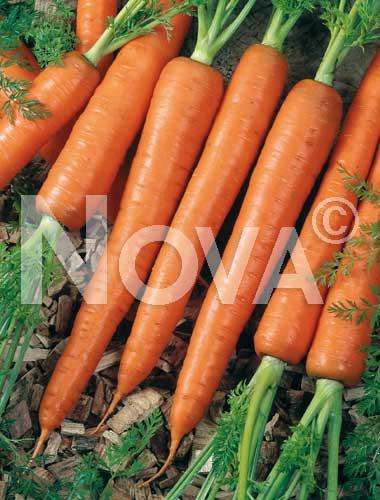carota saint valery