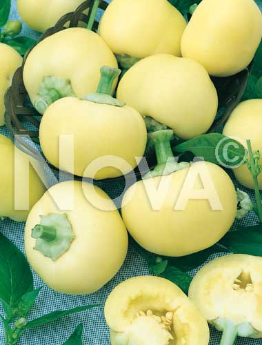 peperone giallo botinecka