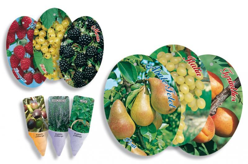 Pronto vendita foto di frutti da appendere esci dalla for Cartellini per piante